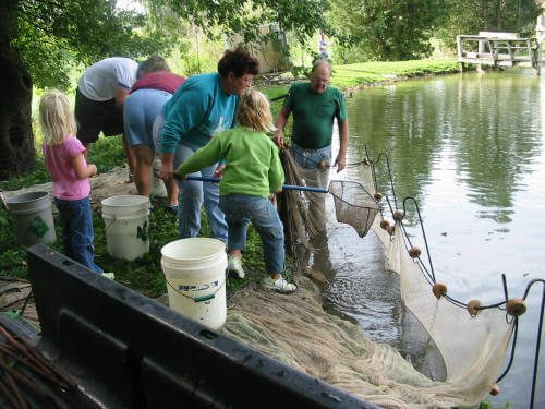 Seining at the fish hatchery.